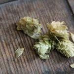 Craft Beer Hopfen